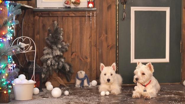 Две очаровательные собаки готовы праздновать рождество