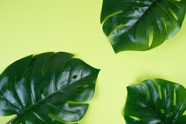 Цветной зеленый фон с тропическими листьями монстера. креативный дизайн фона. копировать пространство
