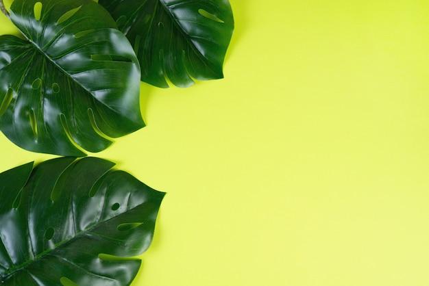 Цветной зеленый фон с тропическими листьями монстера. творческий фон для дизайна. копировать пространство