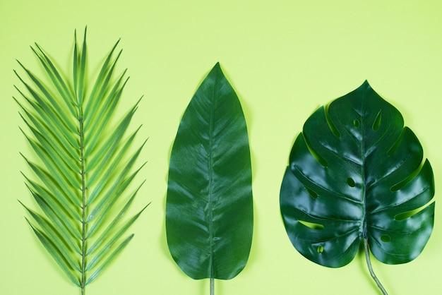 Цветной зеленый фон с тропическими листьями. творческий фон для дизайна.