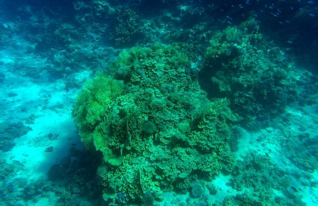 水生青深い海底水中の背景