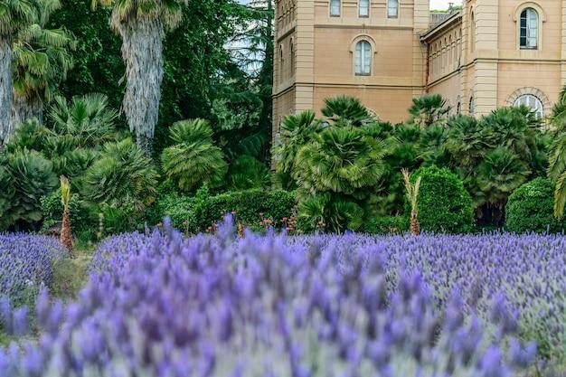カトリック教会の美しいラベンダー草原の眺め。ヨーロッパ、春、ガーデニングのコンセプトです。