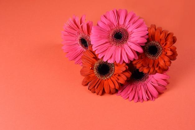 赤の背景、コピー領域にガーベラの花束。素敵なグリーティングカードのデザイン。
