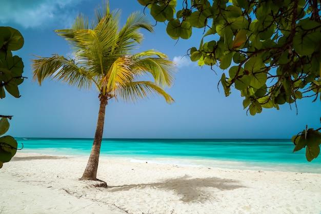 美しいカリブ海のビーチ