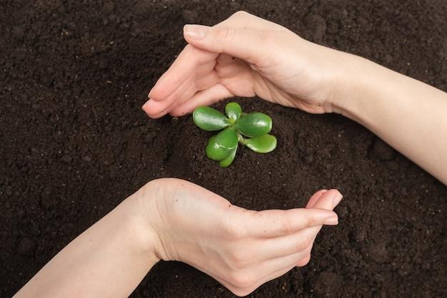 Женщина рука молодой зеленый росток в земле