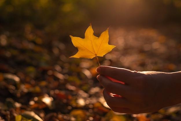 Желтый лист в руке женщины в солнечных лучах
