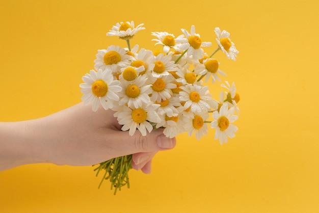 黄色の背景に女性の手で小さなデイジー。