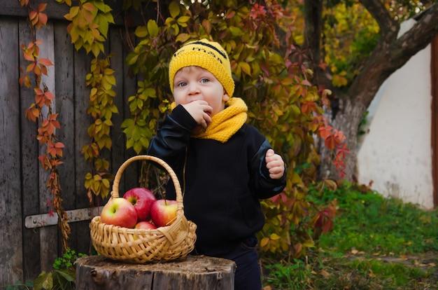 Хороший мальчик в желтой шапке стоит возле пня, на котором стоит корзина с яблоками.