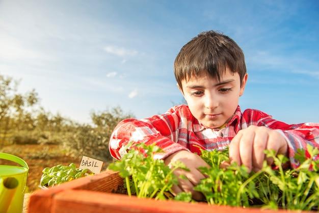 芳香植物を植える子供