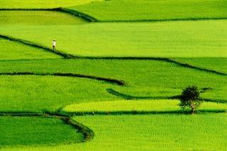 Зеленом поле, природа