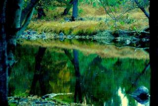 ヨセミテ国立公園、植物