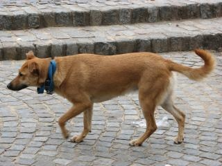 シナモン犬