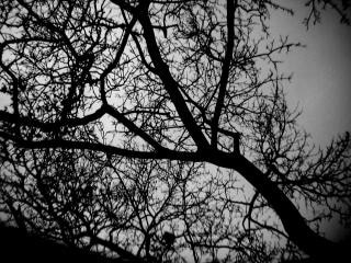 リージェントパーク、木