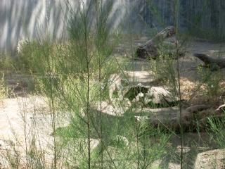スラバヤ動物園でコモドドラゴン