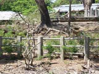 スラバヤ動物園で猿