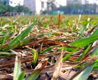 草を乾燥させた