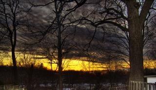 奥地の夕日、森
