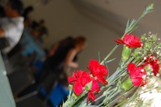赤い花、植物、赤
