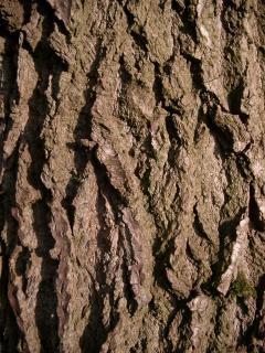 Коры дерева, крупным планом
