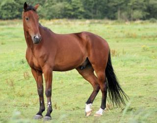オランダで、馬の群れ