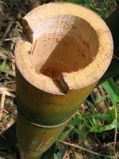 幹の竹を切っ