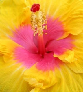 ピンクや黄色の花