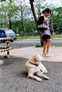 女性を探している犬