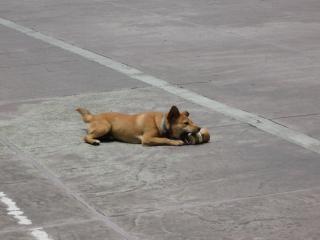 カップ犬再生