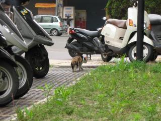ステルス猫