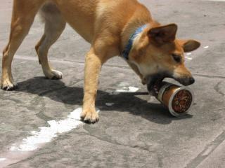 コーヒーカップを攻撃する犬
