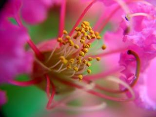 小さな花の中を見る