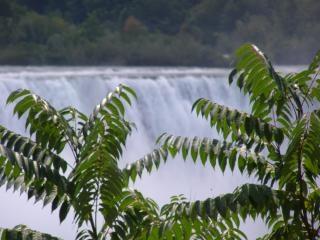Канада - ниагарский водопад - вода - деревья