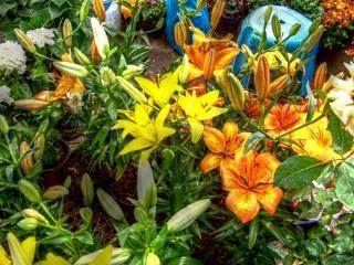 Оранжевого и желтого цветов, цветочные