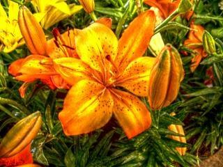 Оранжевые и желтые цветы