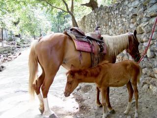 Лошадей, момент
