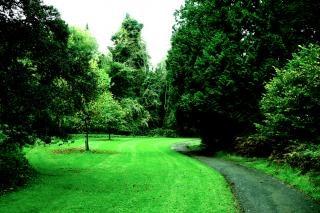 アイルランド、木