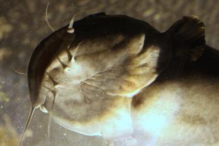 Атланта аквариум, аквариум