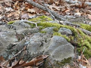 ブルーリッジナチュラル、石