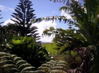 Заднем дворе джунглях
