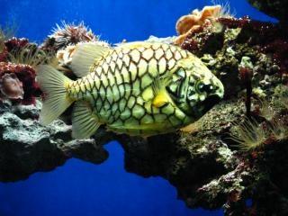 Аквариум в океанографический музей в монт, океанографических