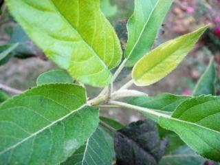 葉が成長を開始する