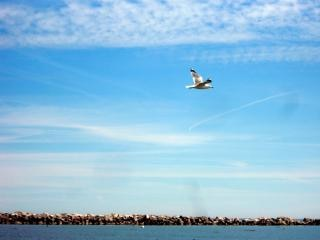 Милуоки береговой линии, чайка