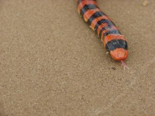 、ヘビの毒