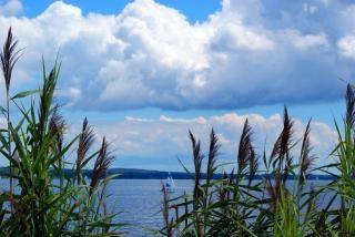 背の高い草の中の海