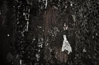 不潔な木の質感、ディケイ