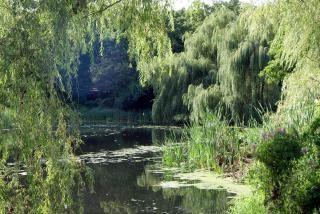 Скрытые болото