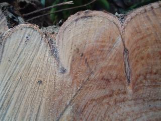 カット木の質感、