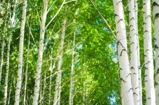 森林、シーン