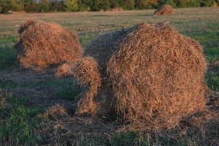 干し草の山、草