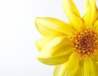 花クローズアップ自然